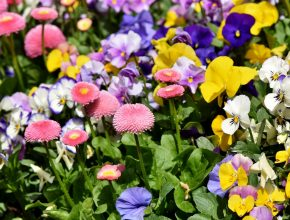 a flower bed with a range of coloured flowers