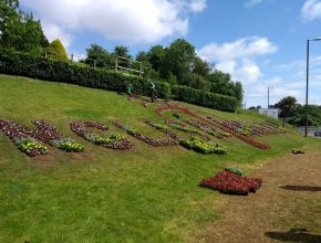 Bedding planting for Torbay Council