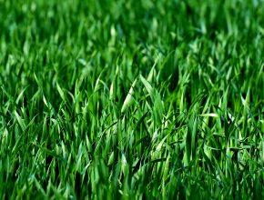 Commercial grounds maintenance grass cutting