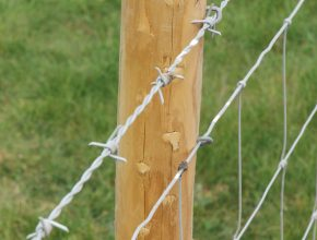 A fence post and barbed wire fence