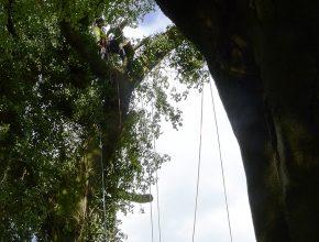 Hazardous tree removals in Chorley 2