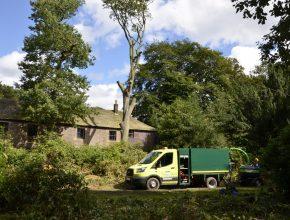 Hazardous tree removals in Chorley