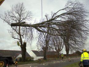 Highway tree removal in Caernarfon