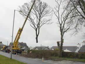 Highway tree removal tree surgery