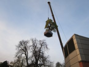 Tree relocation through Civic Trees