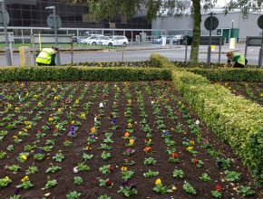 Planting bedding at Gatwick Airport