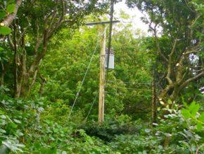 Vegetation clearance zone