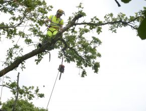 Preparing for tree surgery in Surrey