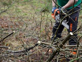 glendale staff member sawing branches off fallen tree