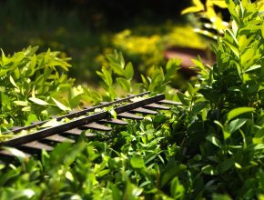 Hedge laying and maintenance