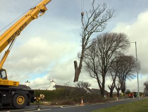 Highway tree removal in Wales