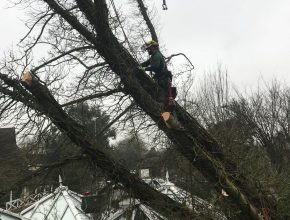 tree fallen on to a conservatory roof