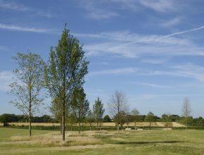 Semi-mature tree planting Civic Trees