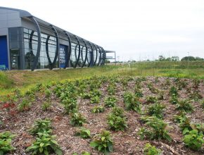 Sustainable commercial planting