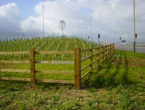 Whip planting on Blunsden Bypass