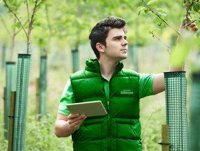 glendale staff member surveying woodland area