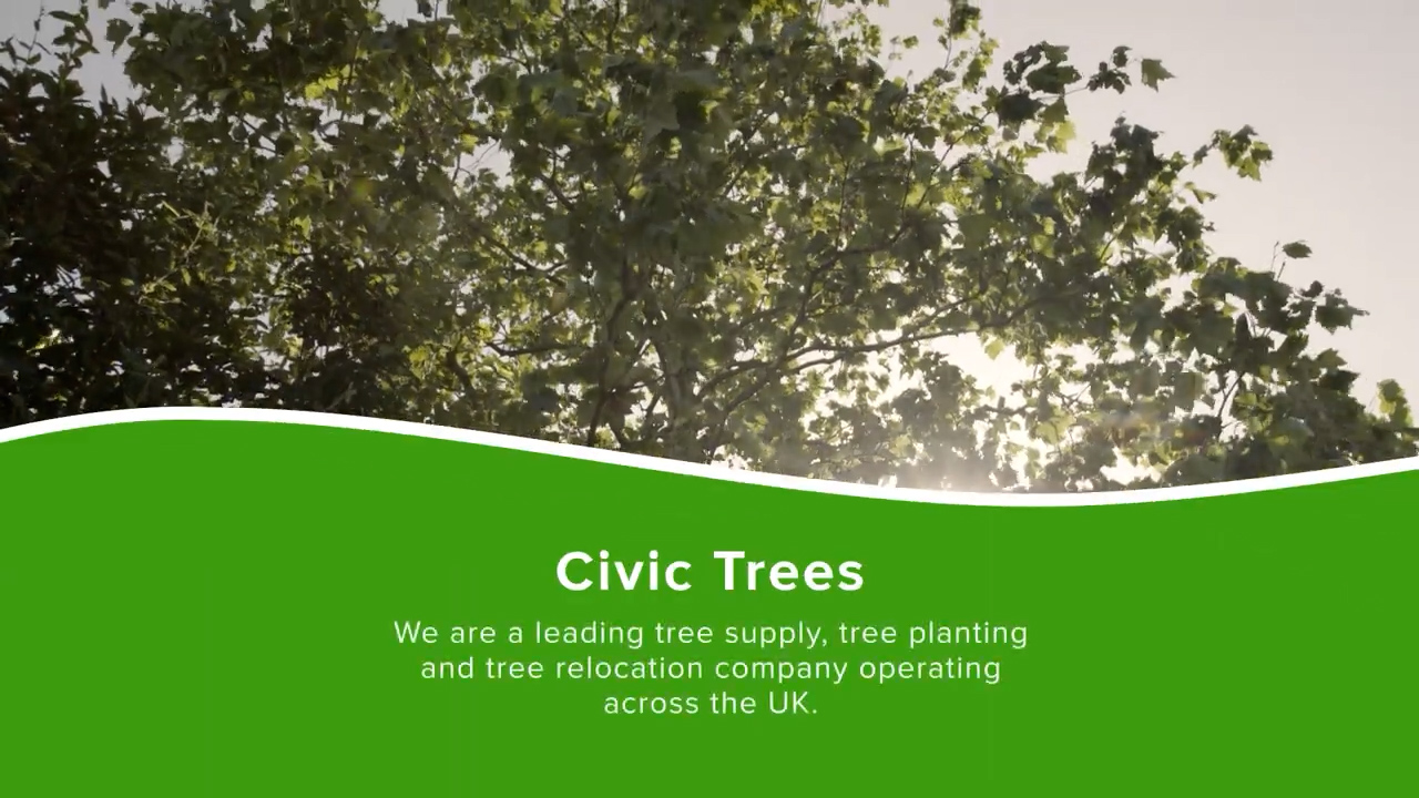 All About Civic Trees